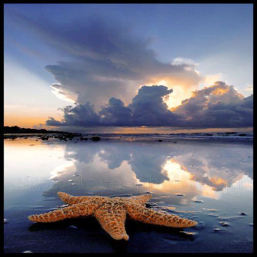 Starfish_by_foureyes